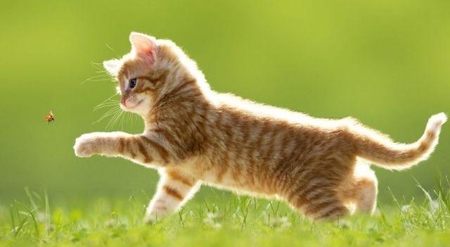 猫と尻尾の関係図wwwwwwwww