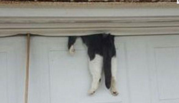 【どうしてそうなった】この猫が置かれている状況が全く把握できない件