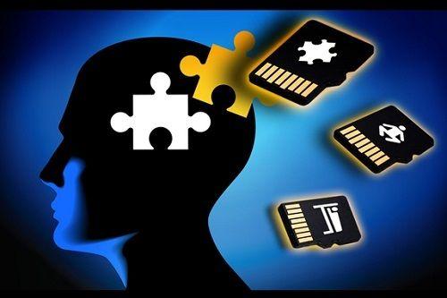 記憶の移植、米研究者らがアメフラシの遺伝子で成功!