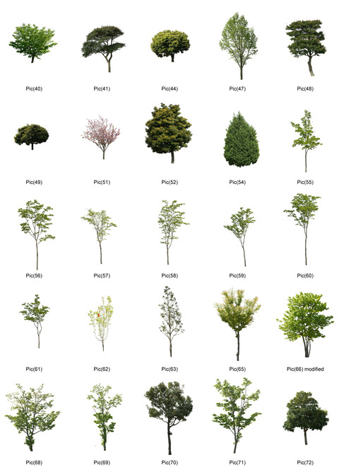 tree2-2