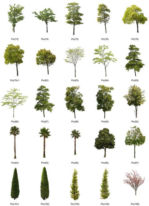 tree2-3
