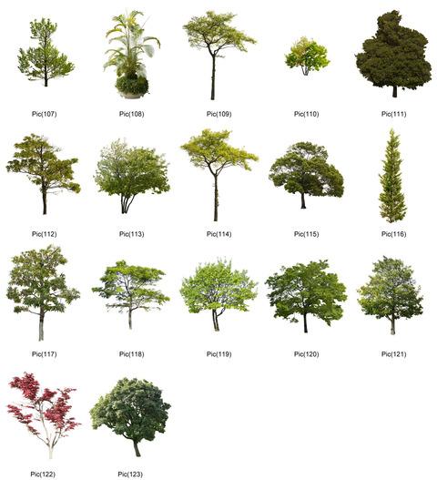 tree2-4