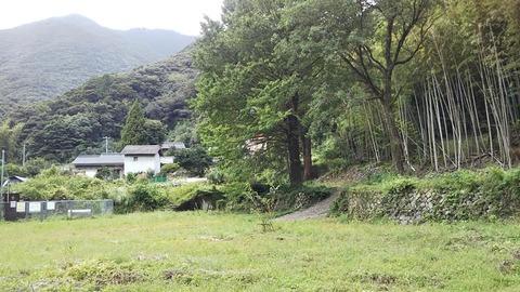 5-2  校舎の前には相変わらず銀杏の木が。