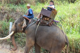 エレファントキャンプ MAESA ELEPHANT CAMP