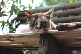 タイ メーサイ 猫 ©アジアしあわせ特急