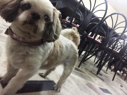 タイ チェンライ 犬