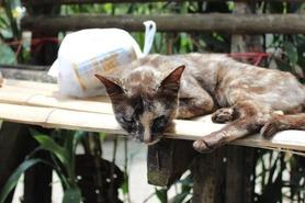 メーサイ 猫 ©人見知り系バックパッカーの「アジアしあわせ特急」