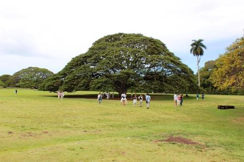 ハワイ 新婚旅行 モアナサーフライダー ©アジアしあわせ特急 (4)