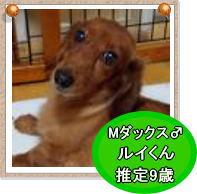 DS1_20140120190428a1e.jpg