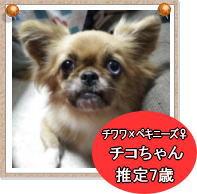 chiko1s1_20140120190130927.jpg
