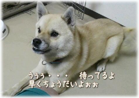 arashi6.jpg