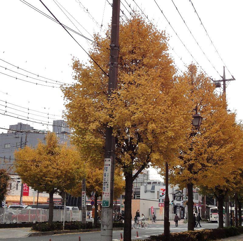 101127-01yoshikawa