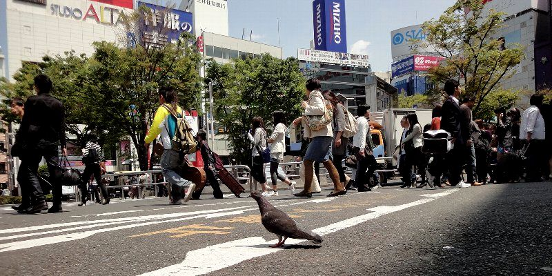 100508-02shinjuku