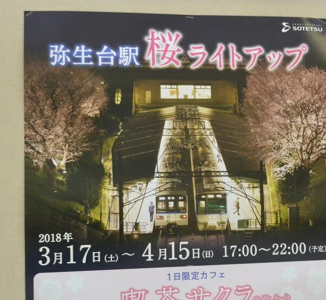 yayoidai_sakura2