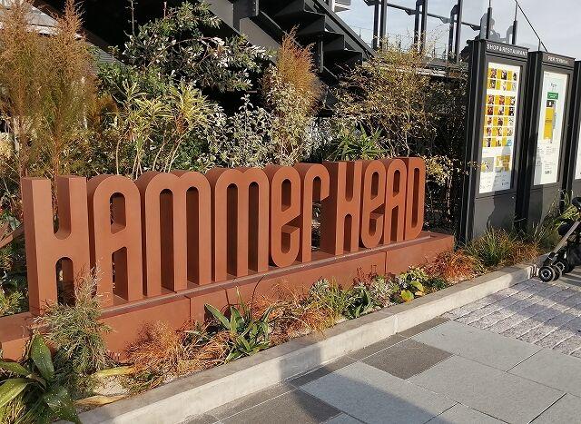 hammerhead1