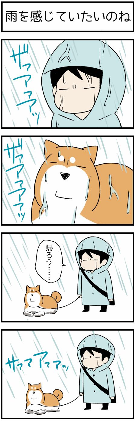 20180926雨を1
