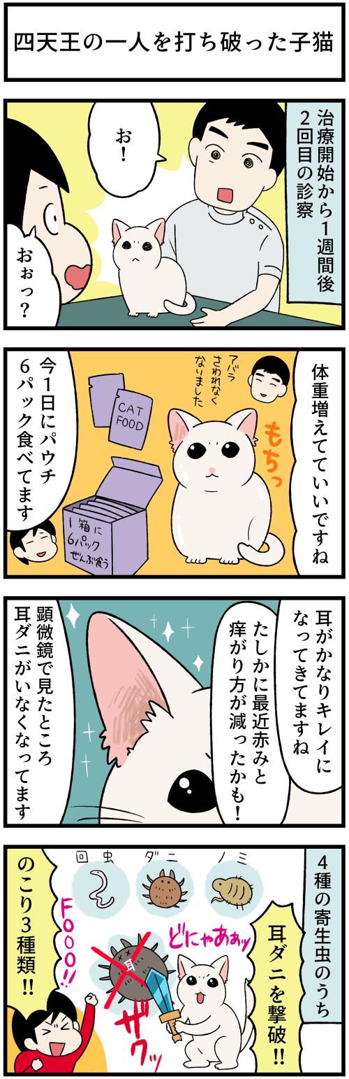 20210621耳ダニ撃破1