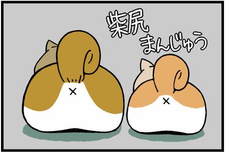 柴犬まる3