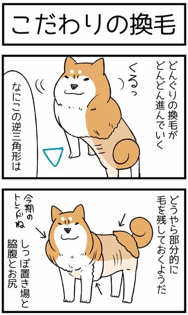 20191121換毛1