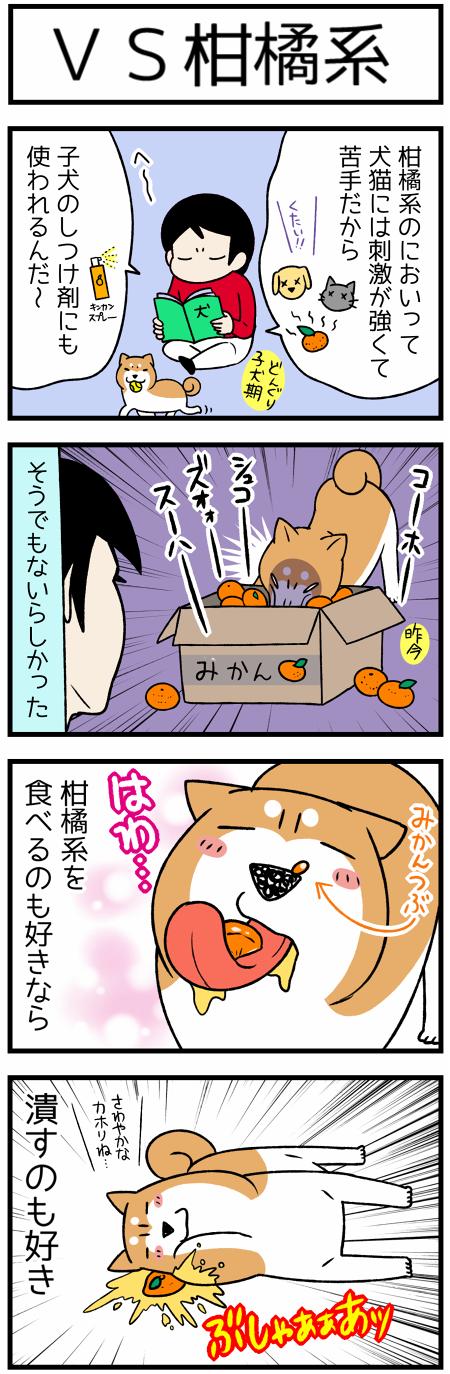 20180116柑橘系1