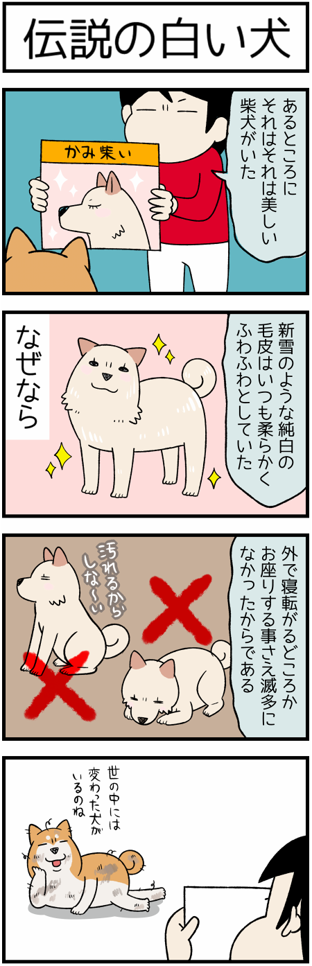 20201108伝説の犬1