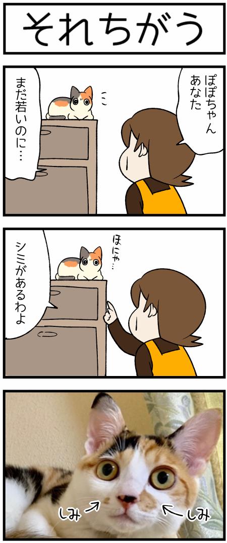 20191030しみ1