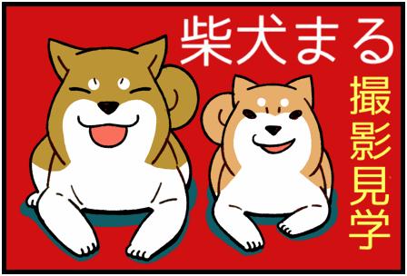 柴犬まる1