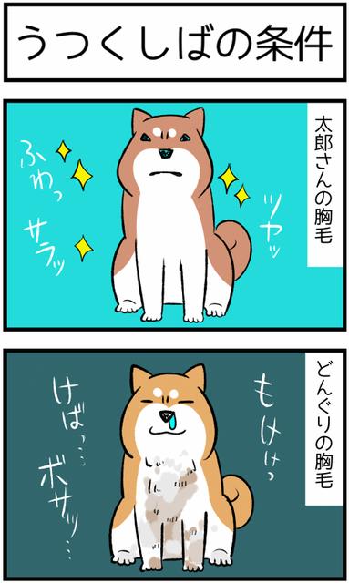 20190225太郎とどん1