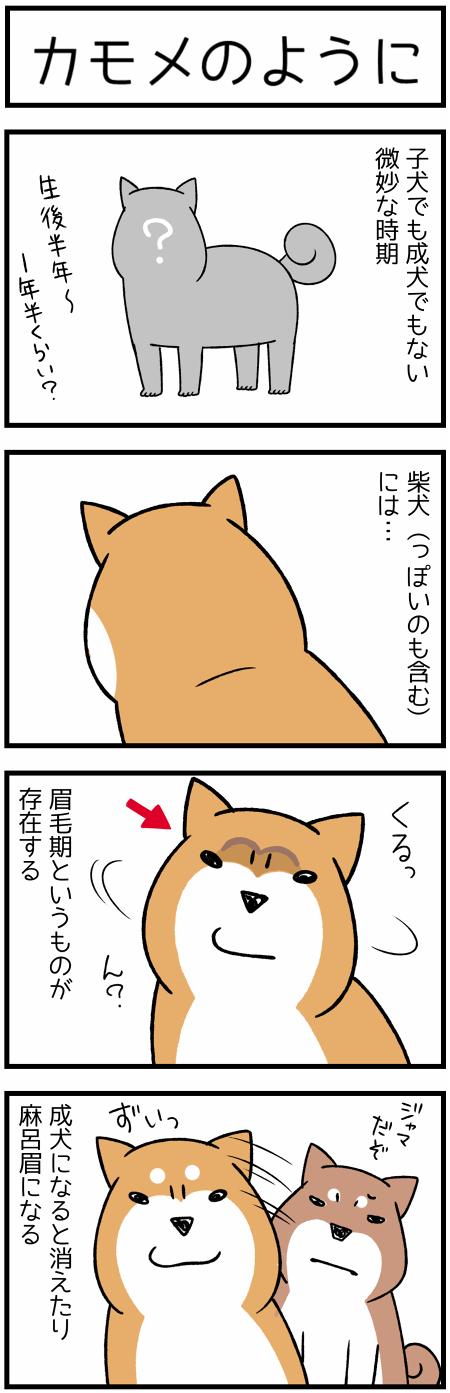 20180503まゆげ1