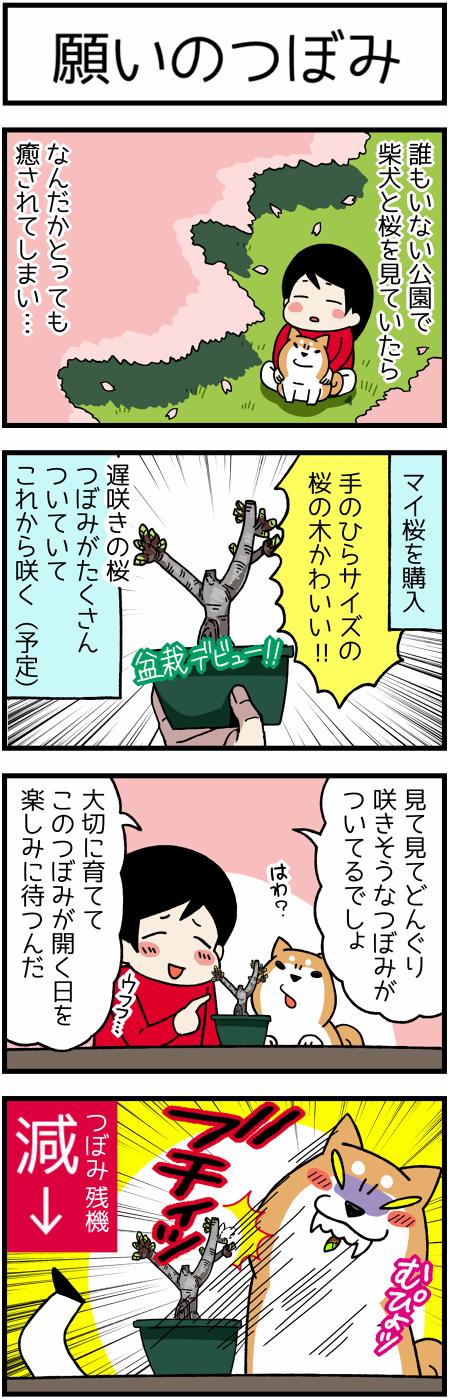 20170413つぼみ1