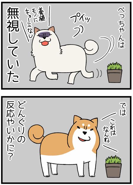 20170626葉っぱ2