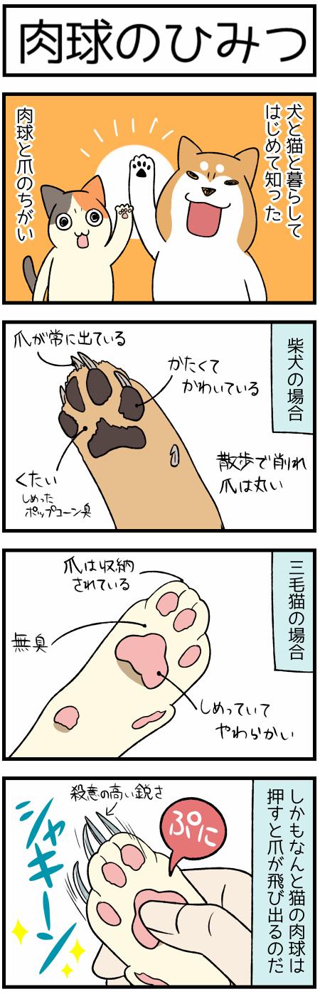 20200711爪の形1