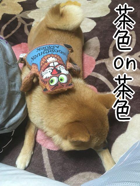 7tosu1fd