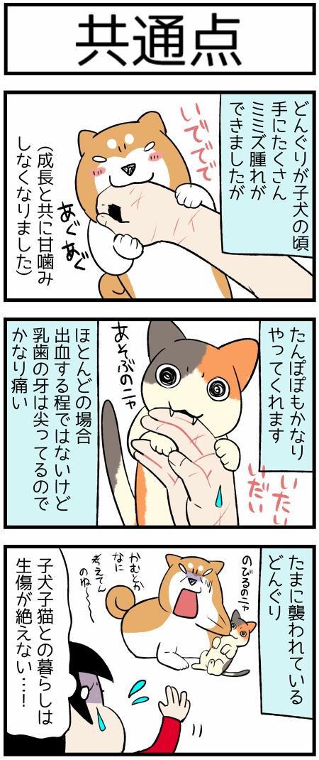 20190919かむ1