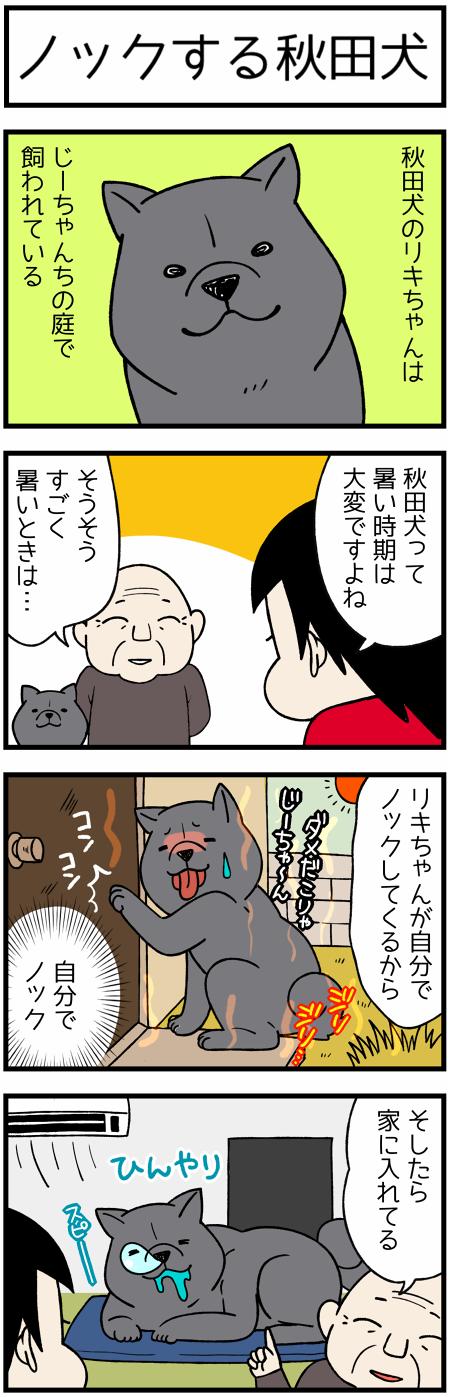 20170706リキちゃん1