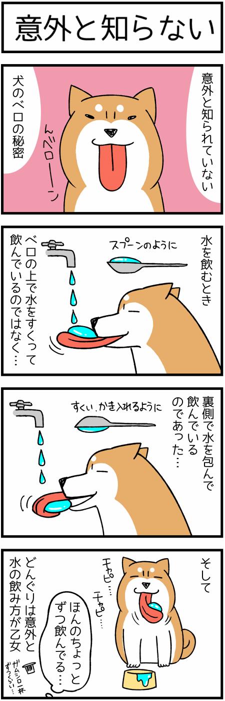 20171016犬のベロ1