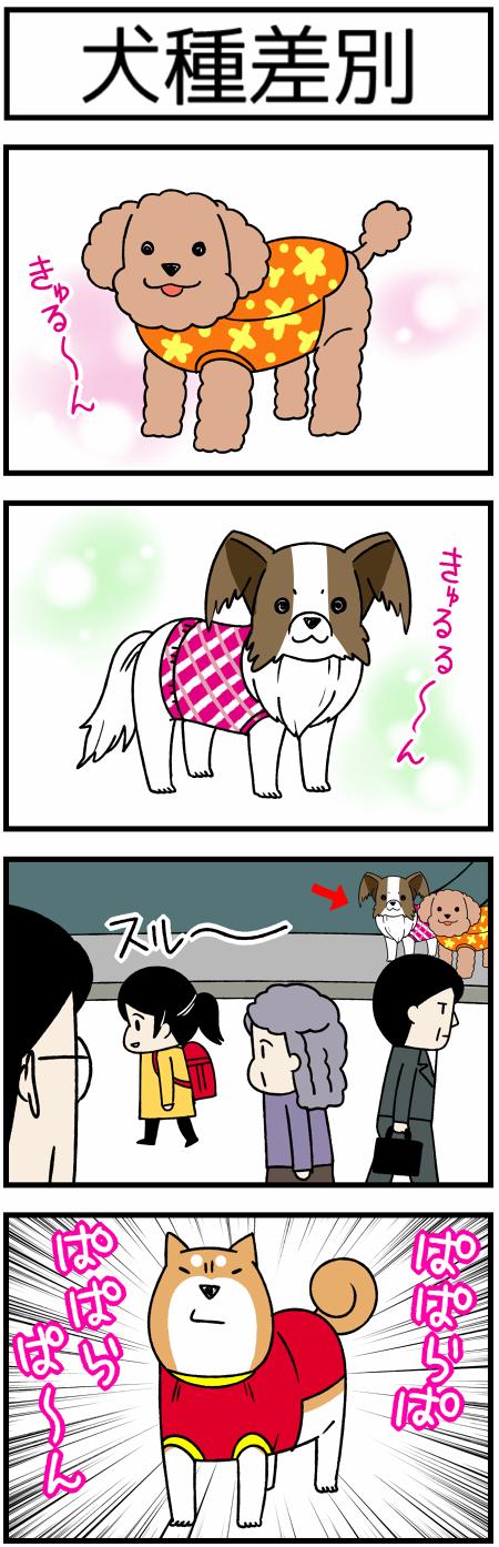 20171127犬種1