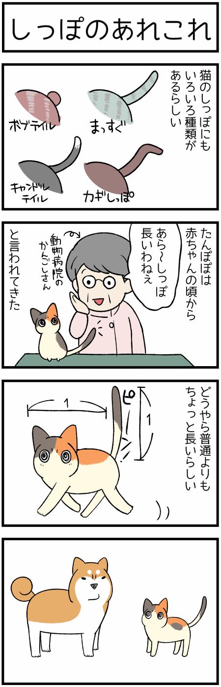 20191027しっぽ1