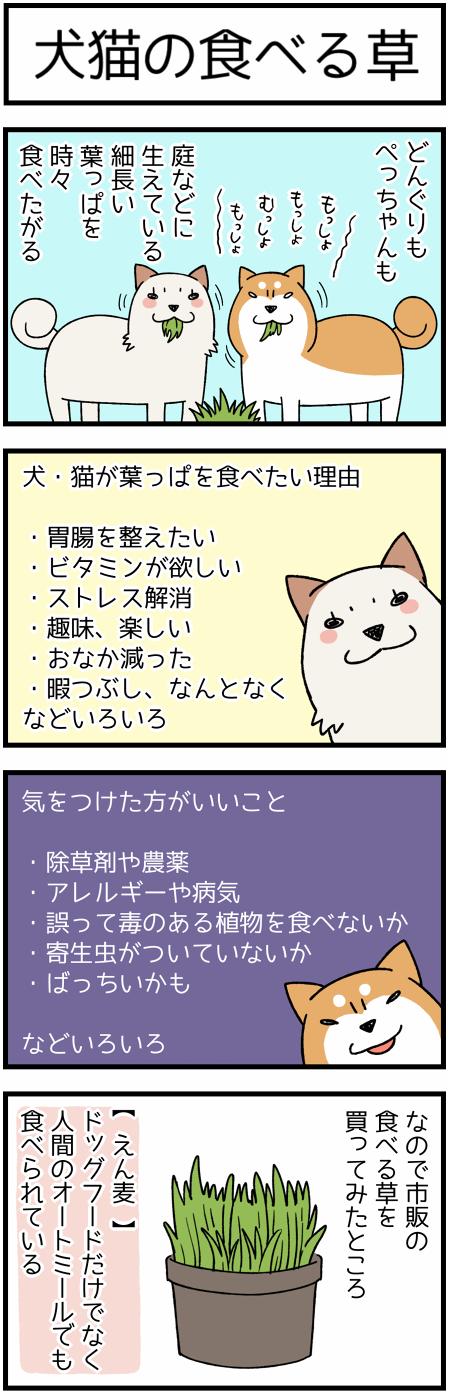 20170626葉っぱ1