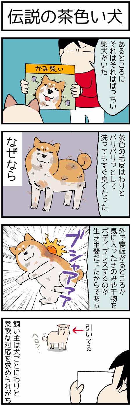 20201108伝説の犬2