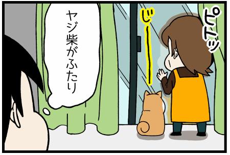 20170327ヤジ柴2