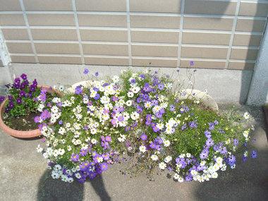 街の花02