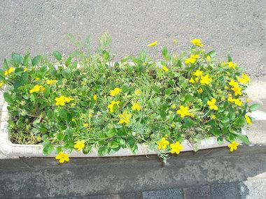 街の花01