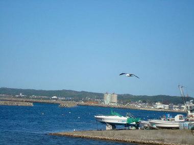 空と海とかもめ