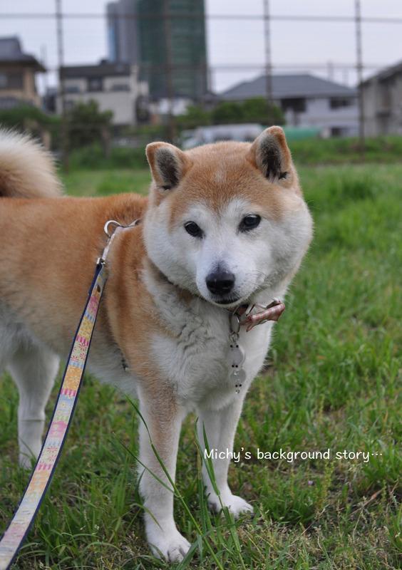 2犬紹介6