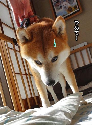 26日ブログ7.jpg