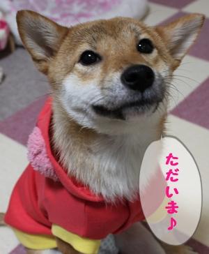 1アンちゃん.jpg