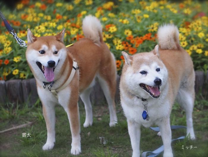 2犬紹介7