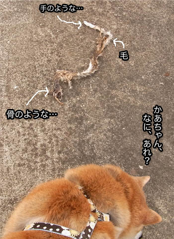 11日ブログ7.jpg