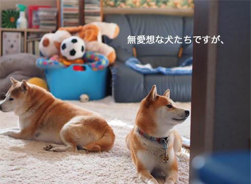 15日ブログ5.jpg